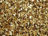 Slaats Candy seed