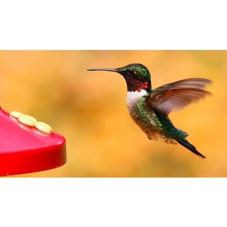 Avian Nektar Kolibri