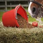 Paardenshop