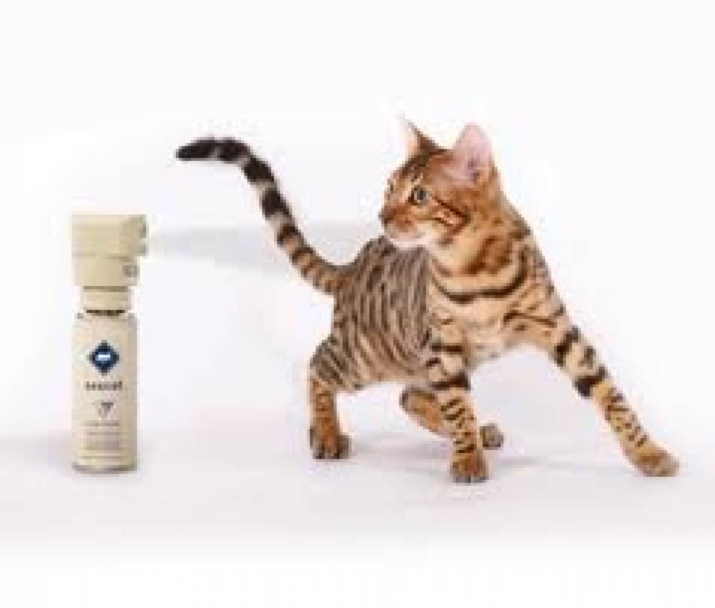Ssscat Automated Cat Deterrent Purrfect Design