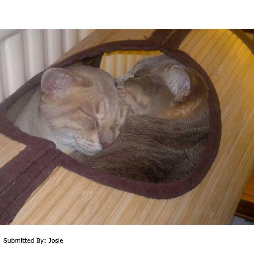 Bamboo Radiator Bed Hammock Cat Purrfect Design