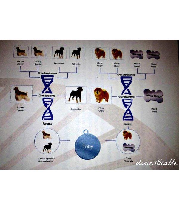 DOG DNA TEST - WISDOM PANEL INSIGHTS