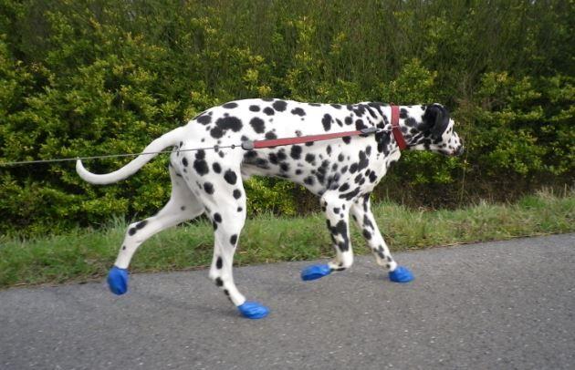 Design Voor Honden : Pawz hondenschoenen hondensokken purrfect design