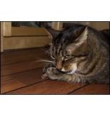 Tabby Tijger Matatabi sticks - Silver Vine - Japanse Catnip