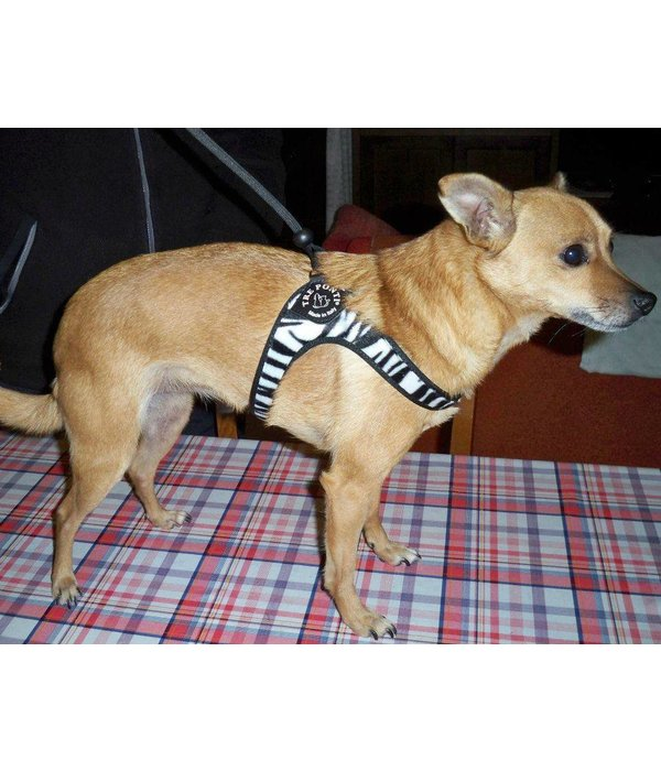 Tre Ponti Liberta dog harness Animal Fashion