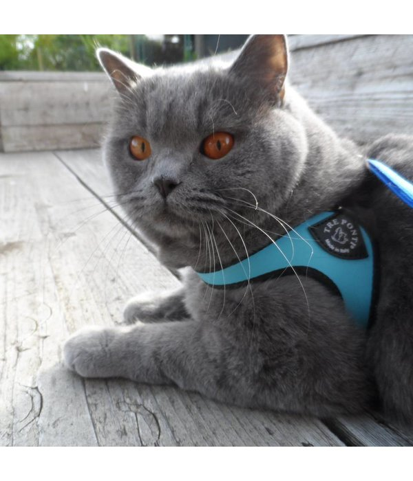 Tre Ponti Liberta cat harness