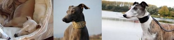 Sighthound Specials