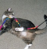 Cat Dancer Rainbow Cat Charmer
