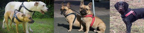Tre Ponti voor medium tot grote honden