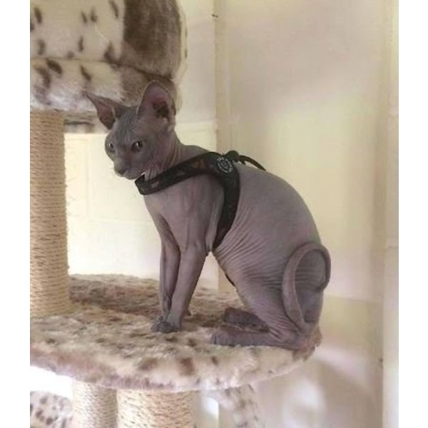 Liberta Army cat harness