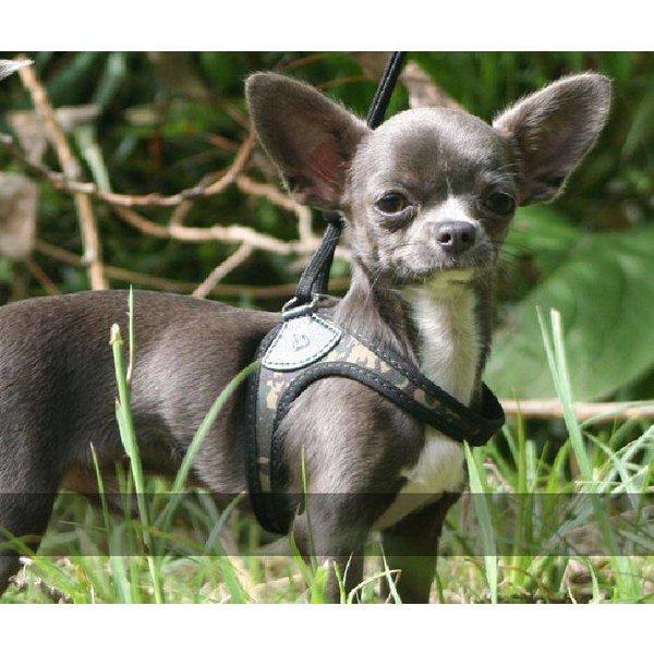 Liberta Army-Camouflage dog harness