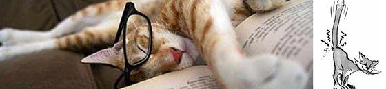 Cat Behaviour Books
