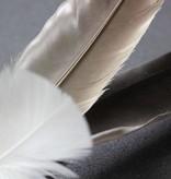 Tabby Tijger Hengel met vogel