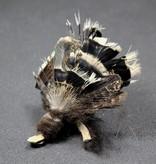 Tabby Tijger Golden Eagle