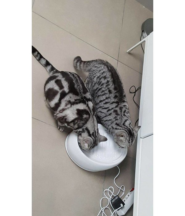 Lucky-Kitty Drinking Fountain