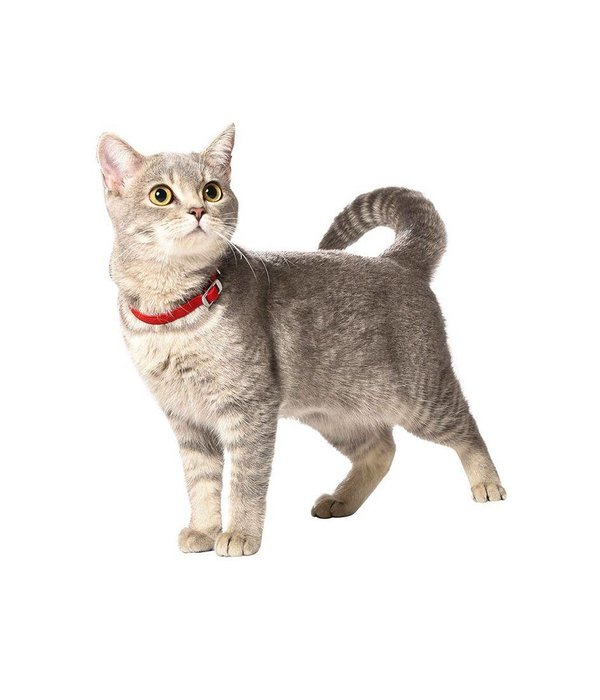 Flex cat collar