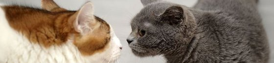 Hulpmiddelen bij introductie katten