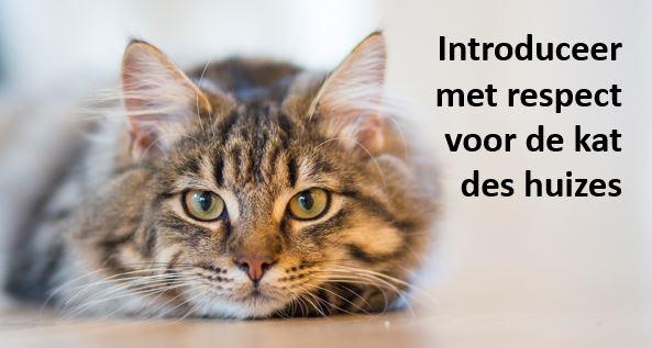 introduceer met respect voor je eigen kat