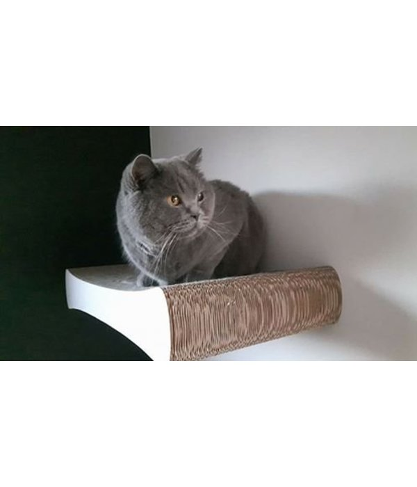 Cat-on Tablet Wall Wit