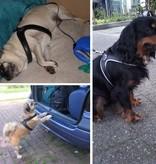 Tre Ponti Fibbia dog harness