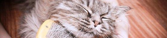 Vachtverzorging Kat