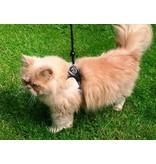 Info Pagina: Met uw kat op stap aan de lijn? Training tuigje