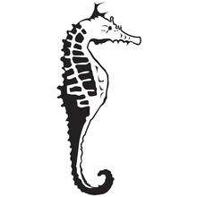 Kaisercraft Sea Horse Embossing Folder (EF234)