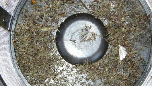 De BliZzz muggenlamp - de meest effectieve lamp voor het vangen van muggen