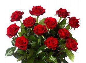 Prachtige rode rozen