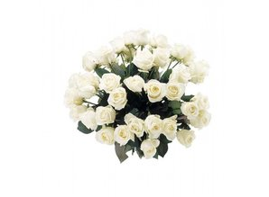 Mooie witte rozen