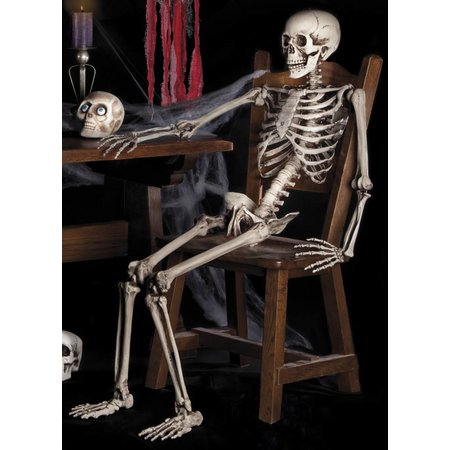 Menselijk skelet van 160cm