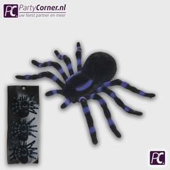 Enge zwarte spinnen