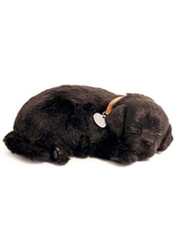 ADO den Haag Perfect Petzzz soft Black Labrador