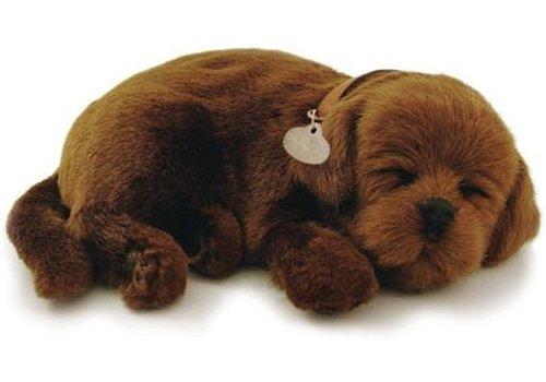 ADO den Haag Perfect Petzzz soft Chocolate Labrador