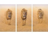 Three Kings - WWF Edition (206 x 135 cm)
