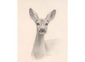 Schets jong hert (35 x 45 cm)