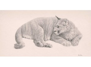 Puma (60 x 40 cm)