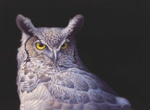 Amerikaanse Oehoe (40 x 30 cm)