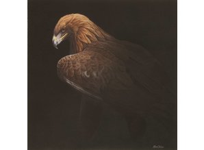 Golden Eagle 2 (50 x 50 cm)