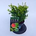 Ilex Dark Green Haag