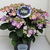 HORTENSIA FLAIR AND FAVOURS