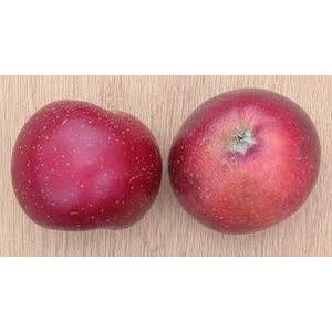 Appel Domestica Sterappel