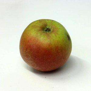 Appel Domestica ´Schone van Boskoop´