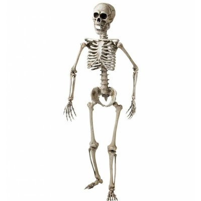 Namaak skelet volwassen mens voor Halloween