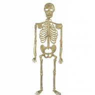 Halloweenaccessoires skelet 32cm
