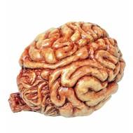 Halloweenaccessoires: Hersenen