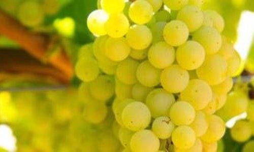Onze favoriete wijnen voor de zomer!