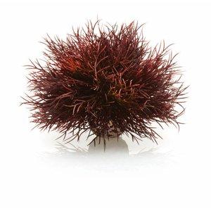 biOrb Sea lily crimson