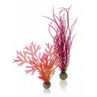 biOrb Easy plant 2x medium red/pink
