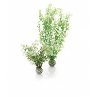biOrb Easy plants 2x medium winter bloemen